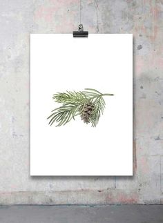 The scent of the forest - Pine by Valgren Design
