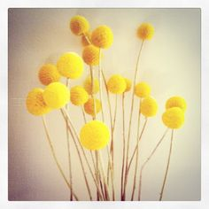 Liking this yellow against the wall colour.. same as my walls. I'm inspired!