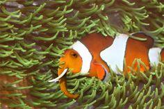 Elephown Fish