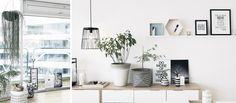 https://jysk.pl/blog/zielony-trend-czyli-rosliny-w-naszych-domach