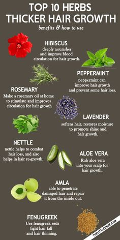 Top 10 Amazing Herbs For Faster and thicker Hair Growth | The Little Shine