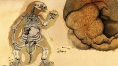 Meet some of the prehistoric species featured in the series.