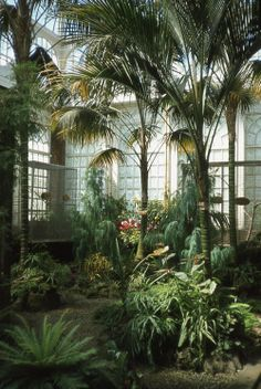 buddhabrot: Palm House 1974 (oh to have a greenhouse)
