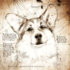 """Pembroke Welsh Corgi Face"" Detail of a Da Vinci style drawing"
