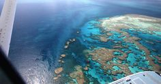 The Steppingstones of Bait Reef Great Barrier Reef as seen from the cockpit of a 1952 Amphibious DeHavilland Beaver. #steppingstones #Baitreef #greatbarrierreef #thisisqueensland #lovewhitsundays #seeaustralia #australia #amazing_australia by nicholashoyle http://ift.tt/1UokkV2