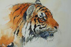 Tiger-005-800