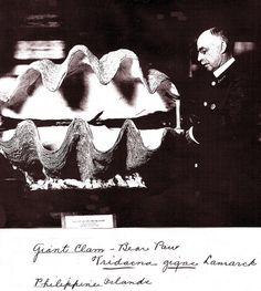 Giant Clam , Natural History Museum   1917