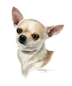 CHIHUAHUA Dog Signed Art Print by Artist DJ Rogers by k9artgallery, $12.50