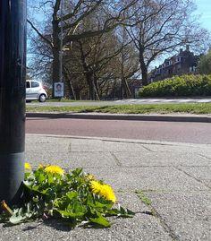 Heemraadssingel  foto: Heleen van Zantvoort Rotterdam, Sidewalk, Side Walkway, Walkway, Walkways, Pavement