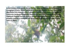 #ClippedOnIssuu from Take picture a first time orangutan south kalimantan by shinta sukmawati