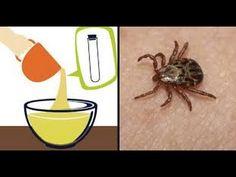 Como acabar com as pulgas e carrapatos em gatos e cachorros - YouTube