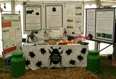DUNG BEETLES DIRECT made its first public appearance at The Really Wild Food & Countryside Festival 2012! The stall showcased live insects from across the world to give everyone a chance to get up close and personal to some of nature's most wonderful creatures.