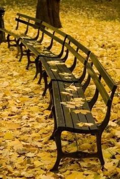So peaceful... the perfect place to enjoy the breeze, listen to the leaves falling and reading my fav book :)