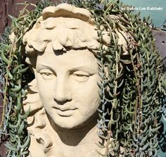 Head gardens