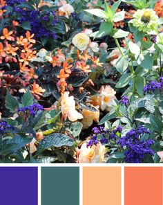 summer flowers colour inspiration