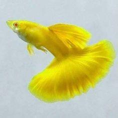 Nano Aquarium, Nature Aquarium, Planted Aquarium, Betta Aquarium, Oscar Fish, Betta Fish Types, Tropical Fish Tanks, Freshwater Aquarium Fish, Cool Fish