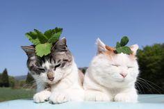 ✧Pinterest // @naomiokayyy Cats, dogs, animals, creature, wildlife, feline, canine, furries, kittens, kitty, puppy, puppies, pups