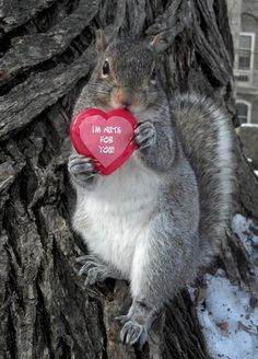This Cute Squirrel Stole the Hearts of Many Squirrel Girl, Cute Squirrel, Squirrels, Squirrel Pictures, Funny Animal Pictures, Animals And Pets, Baby Animals, Cute Piggies, Fauna