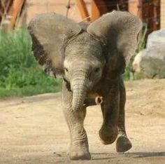 The Toledo Zoo - new baby elephant 2014