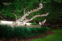 Outdoor Christmas Tree Lights | Flickr - Photo Sharing!