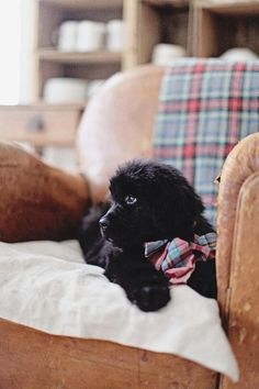 nothing cuter on the planet than a baby newfie