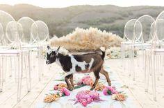 goat cutie