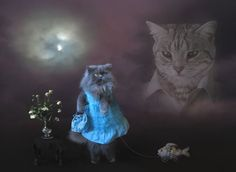 Cat in a dress walking a fish on wheels while another cat wearing a collared shirt and glasses looks on from the clouds of a nighttime sky