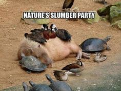 Nature's slumber party