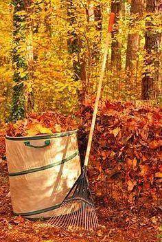 Autumn work...