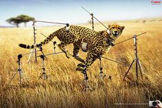 50 Creative and Funny Print Ads Around the Globe Creative Advertising, Advertising Design, Ads Creative, Funny Advertising, Advertising Ideas, Advertising Campaign, Creative Ideas, Funny Commercials, Funny Ads
