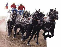 March 2007 Horse Gazette Feature  Jason Goodman and Texas Thunder.  Jason grew up in Clearmont, WY.