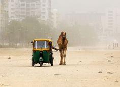 """Autorikscha mit Haustier: In Indien ist das dreirädrige Mobil das Alltagsgefährt. Bei dem Rennen """"Rickshaw Run"""" durchqueren Dutzende Teams damit Nordindien."""
