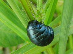 Beetle