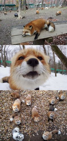 Japanese Fox Sanctuary | exPress-o | Bloglovin'