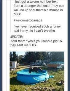 this is so funny if I lived in Canada I would want a moose in my pool Funny Shit, Funny Cute, The Funny, Funny Stuff, Funny Things, Random Stuff, That's Hilarious, Funny Humor, Random Things