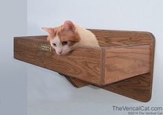 Wall Mounted Cat Bed ♥♥ See More on #Cats in Ozzi Cat #Magazine ! >> http://OzziCat.com.au ♥ ♥