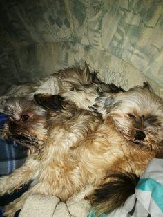 Hunde Foto: Birgit Christine und Hinnerk und Sally - Schlafenszeit Hier Dein Bild hochladen: http://ichliebehunde.com/hund-des-tages  #hund #hunde #hundebild #hundebilder #dog #dogs #dogfun  #dogpic #dogpictures