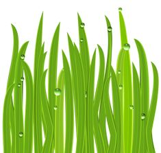 Grass Decor PNG Clipart Image