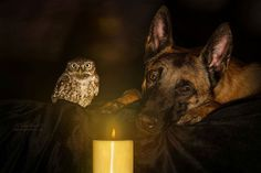 Heartwarming Friendship of A Dog and An Owl