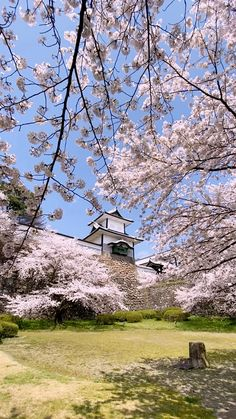 Beautiful Places In Japan, Beautiful Sites, Beautiful Places To Visit, Spring Photography, Nature Photography, Japan Spring, Himeji Castle, Dark Green Aesthetic, Tokyo Japan Travel