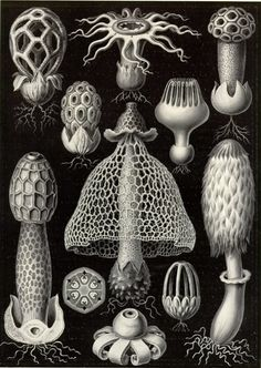 scientific illustration, design squish blog, botanical illustration, forms of nature