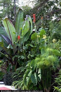 Tropical Patio Design Ideas, Renovations & Photos #TropicalGarden