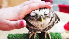 An Extremely Satisfied Owl