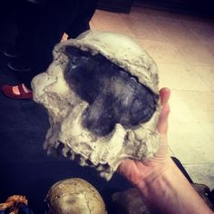 From brennawalks on Instagram: Dmanisi - actually a Cylon? #humanorigins #su2014