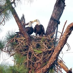 Eagle Cam - Photos