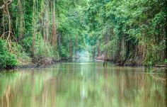 Caroni Swamp, Trinidad and Tobago