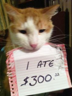 One owner was clearly furious that his pet cat chowed down $300 of his money...