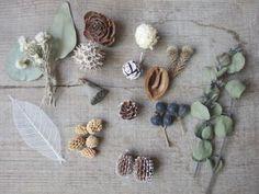 木の実 dryflower driedflower ドライフラワー |FLEURI blog