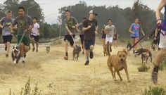 High School Cross-Country Team Invites Shelter Dogs On Their Morning Run