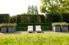 planters, hedges + symmetry